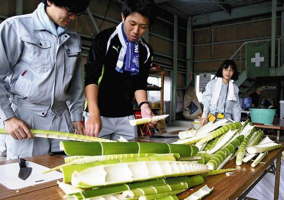 放置竹林の若竹メンマに 藤枝で試食会 : 地域 : 読売新聞 ...