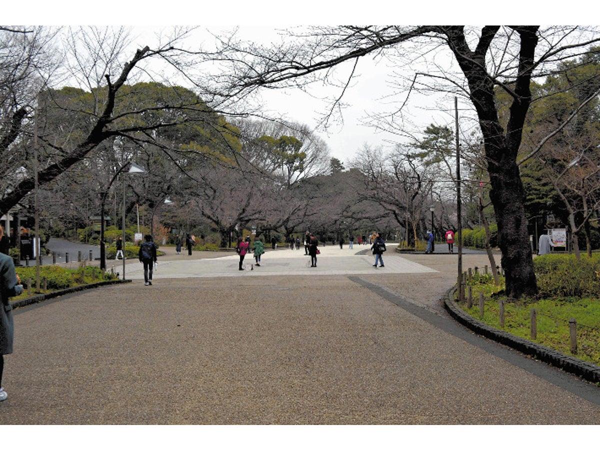 東京 花見 2020