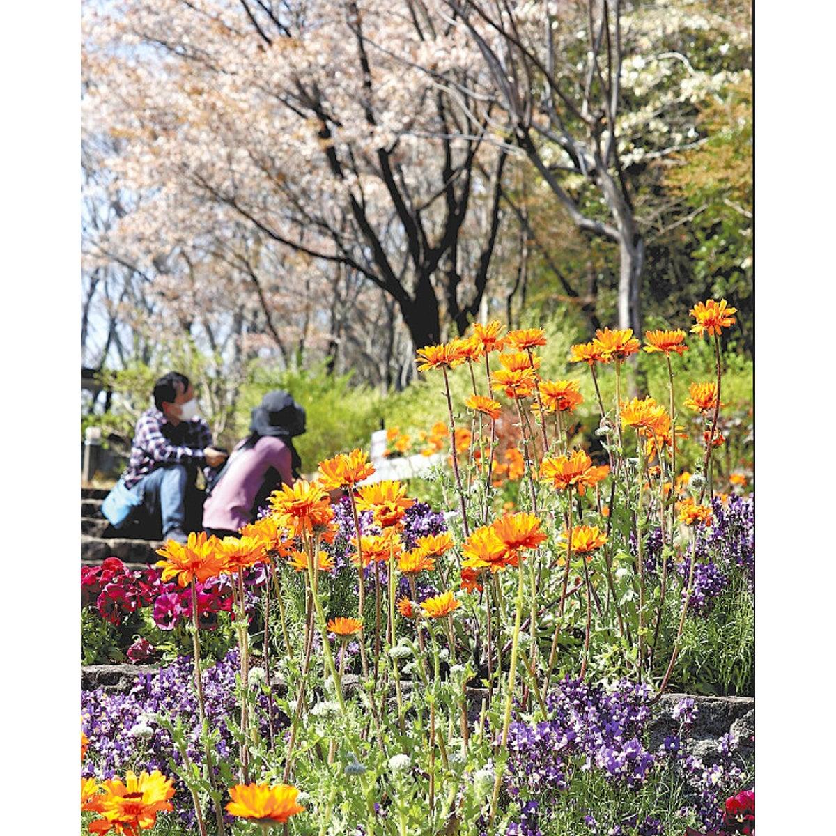 市 植物 公園 水戸