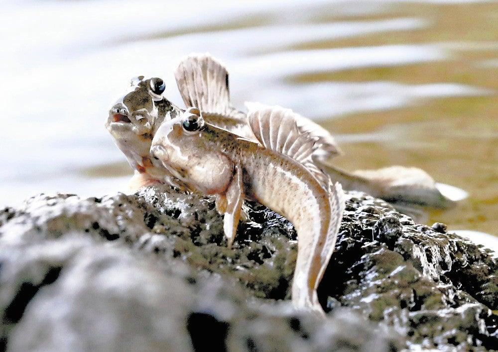 種 絶滅 危惧 世界農業遺産「能登の里山里海」ライブラリー「自然・生き物:絶滅危惧種、希少種の保護活動」|世界農業遺産「能登の里山里海」情報ポータル