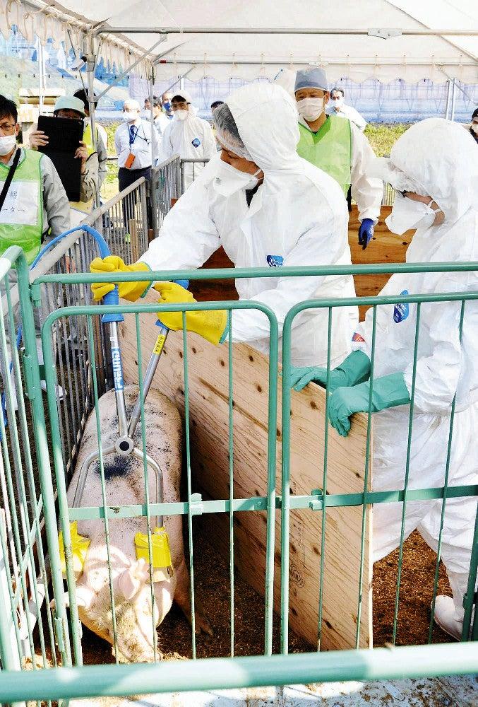 豚 コレラ 群馬