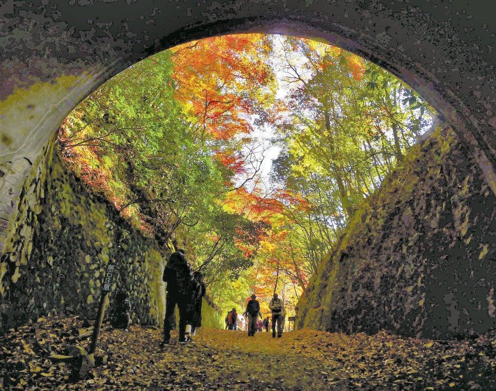 トンネルくぐれば華やぐ扇…旧国鉄福知山線廃線跡で紅葉見頃 : 社会 : ニュース : 読売新聞オンライン