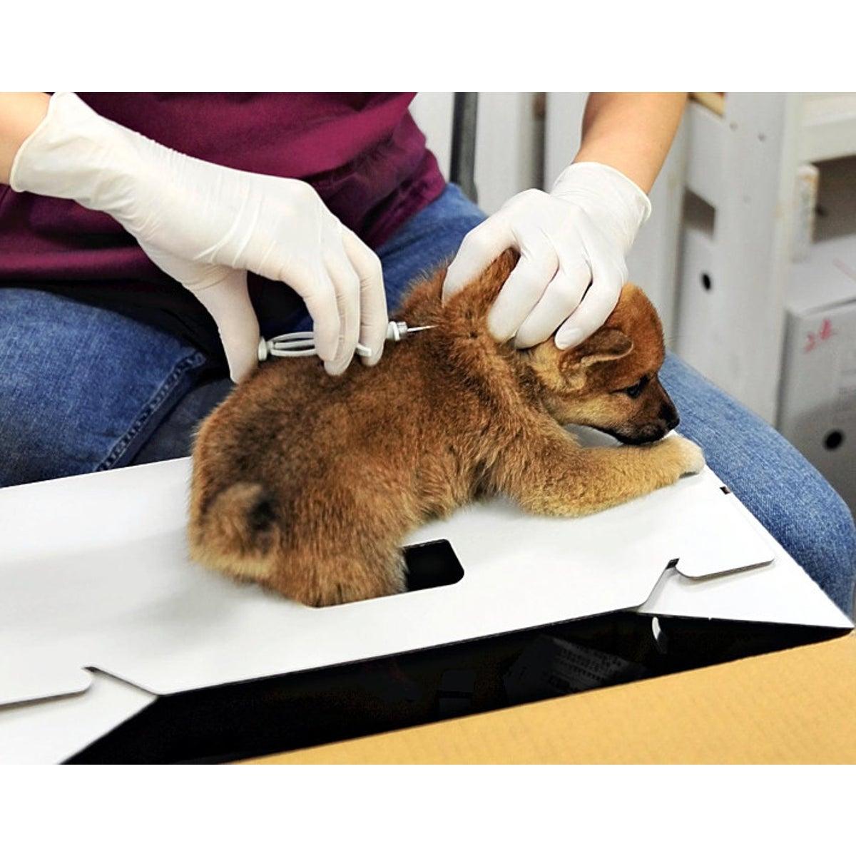 【環境省】ペットの犬猫、マイクロチップ装着義務化へ 登録に300円
