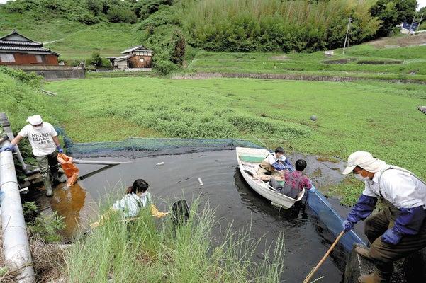 ナガエツルノゲイトウに覆われた本田池で、取水口からの流出を防ぐネットを張り直す市民団体のメンバー